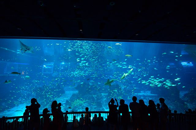 2014。新加坡三日遊 — Day3 S.E.A. Aquarium水族館
